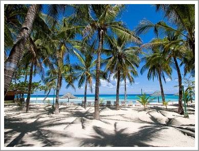 malapascua-coconut